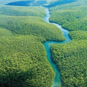 Amazzonia 501