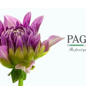"""Paghera """"Nature inside"""""""
